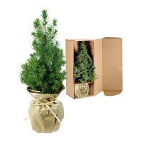 Lebendes Weihnachtsbäumchen mit Ferrero Rocher und mit Werbekärtchen Bild 2