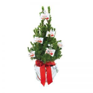 Lebendes Weihnachtsbäumchen mit Ferrero Raffaello und mit Werbekärtchen