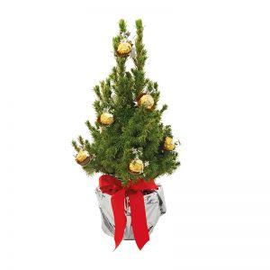 Lebendes Weihnachtsbäumchen mit Ferrero Rocher und mit Werbekärtchen