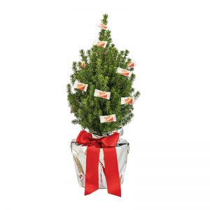 Lebendes Weihnachtsbäumchen mit Traubenzucker und mit Werbekärtchen